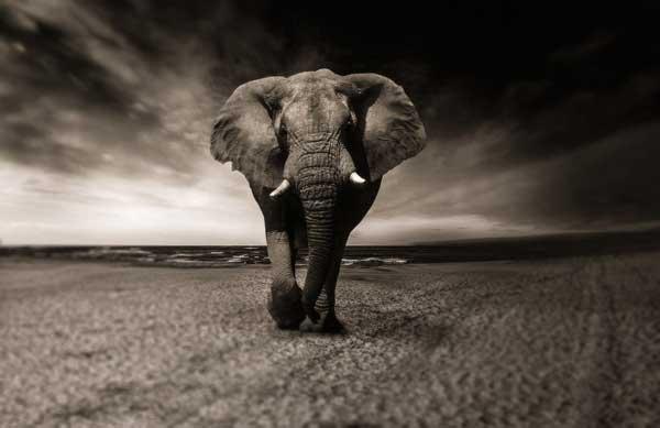 Elefant - Aufrecht durch´s Leben gehen.